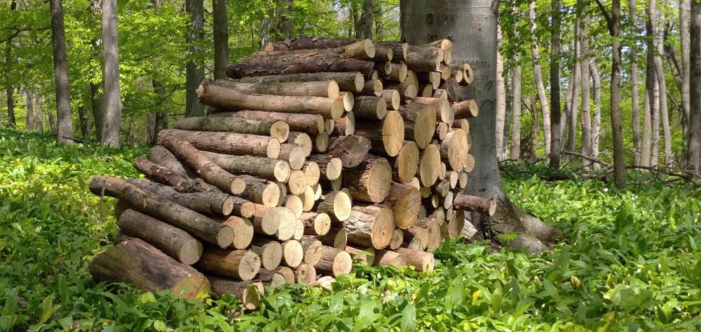 L. Židek: Správcovia lesov predajú drevo tomu, kto dá viac. Poberateľom dotácií