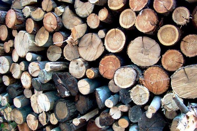 Ťažba dreva v lesoch na Slovensku bola vlani najnižšia za posledné štyri roky