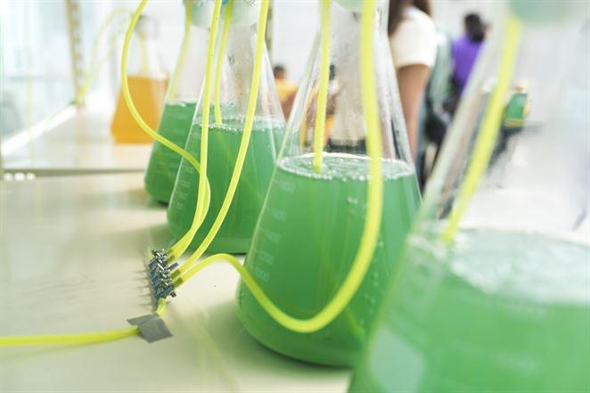 Nástup biopalív druhej generácie