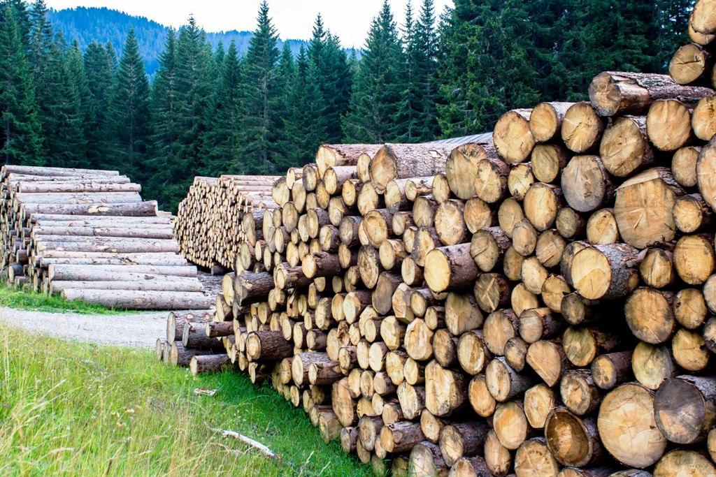 Štátne Lesy SR otvárajú ďalšie elektronické aukcie na drevo