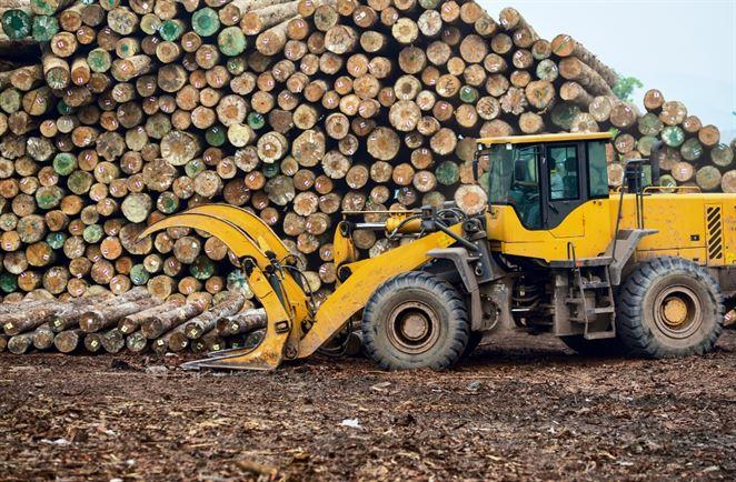 WWF: Ministerstvo obchádza partnerov a odďaľuje riešenie náhodnej ťažby dreva