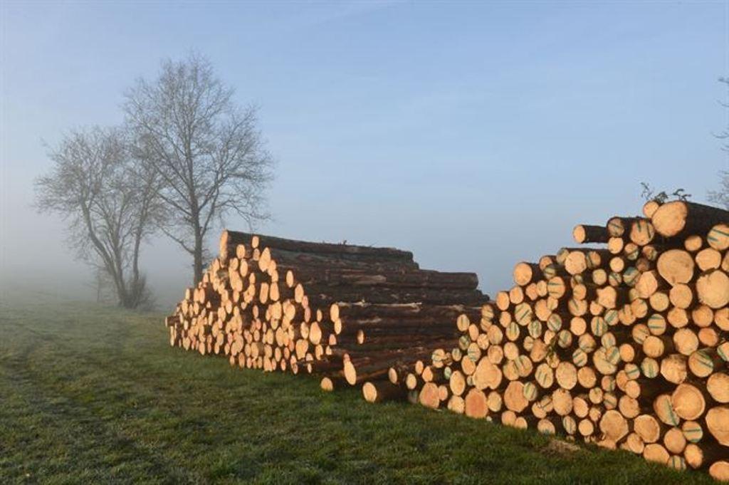 Ministerstvo hľadá nového šéfa štátneho podniku Lesy SR
