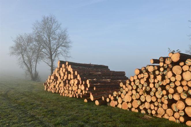 Erik Baláž: Za zlú štruktúru lesov zodpovedajú lesníci. Ťažba dreva sa musí obmedziť