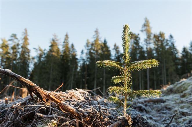 Mestské lesy dávajú viac peňazí do obnovy ako štátne lesy
