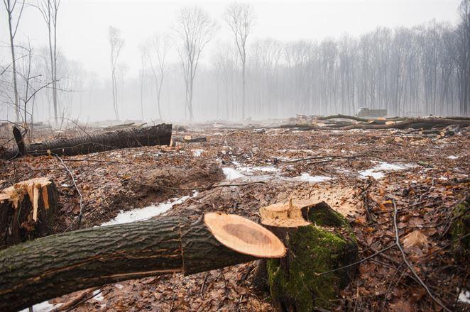 Stĺpček. Tragédia verejných lesov a dotovanej drevnej štiepky