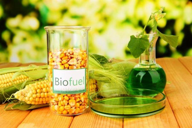 Zvyšky z kukurice áno, repka nie. Ministerstvo vydalo usmernenie pre pokročilé biopalivá
