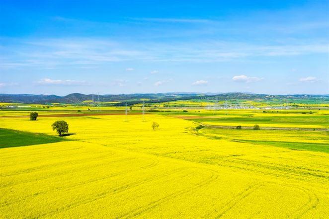 Biopalivá sú pre dekarbonizáciu dopravy nevyhnutné, tvrdia slovenskí biopalivári
