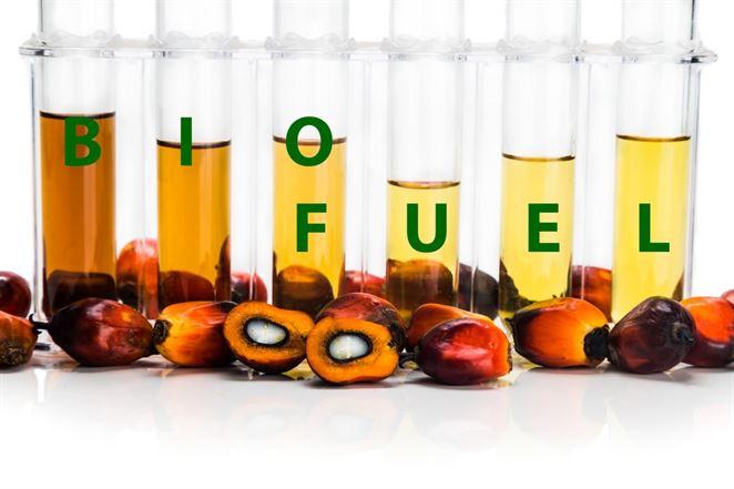 Dlhá cesta k jednotnému trhu pre biopalivá