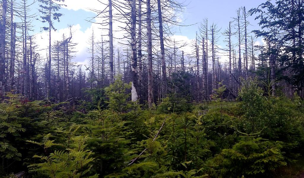 Envirorezort chce prevziať správu časti lesov v národných parkoch