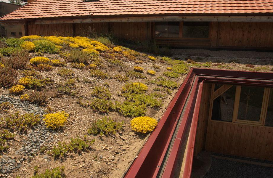 Vďaka Východoslovenskej energetike a.s. (VSE) sa zazelenajú školské záhrady.