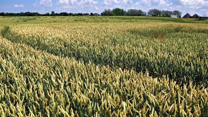 Biopalivá Európania podporujú, tvrdí prieskum biopalivárov