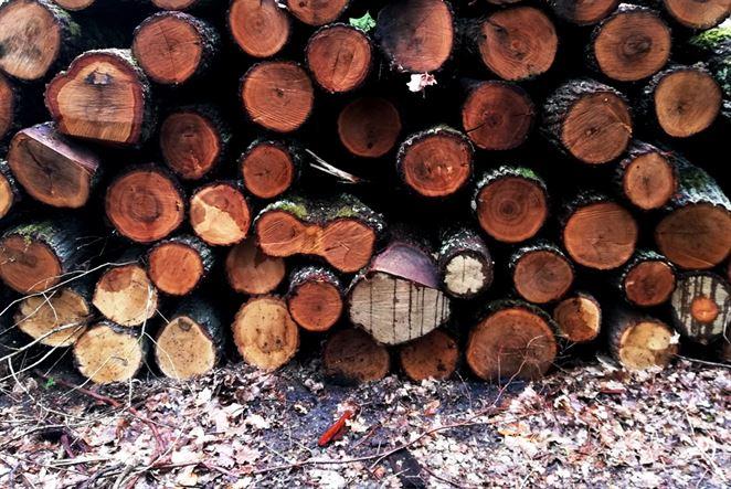 Obchod s drevom sa takmer zastavil. Lesy SR znížili ťažbu o 75 %