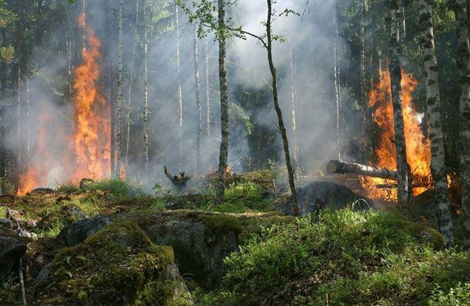 V Zóne vylúčenia pri Černobyle vypukli požiare. Zvýšenú radiáciu u nás nezaznamenali