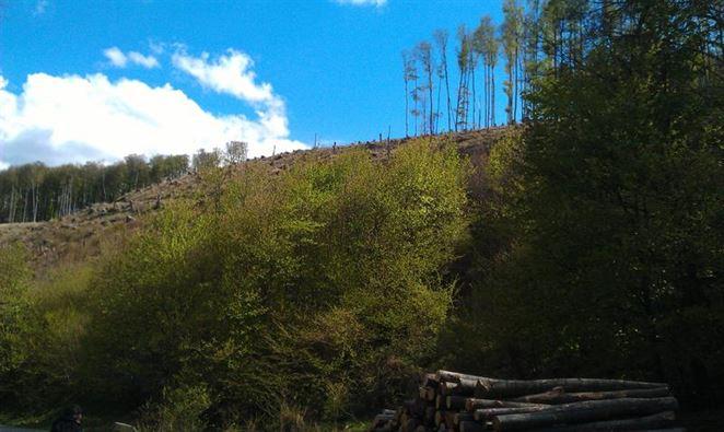 Energetici: my nedrancujeme slovenské lesy