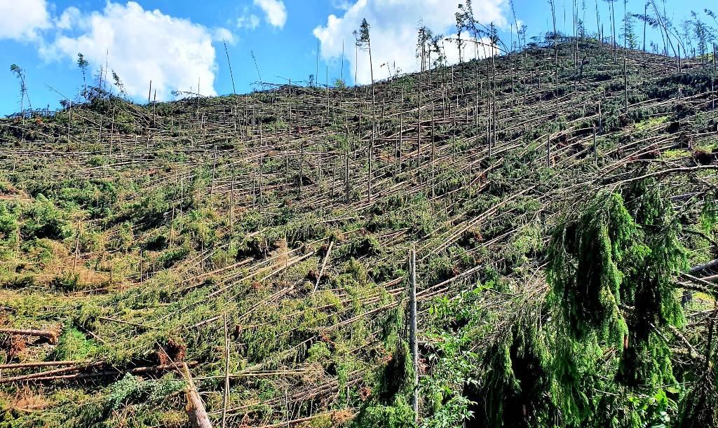 Vietor na Liptove spôsobil veľké škody, padlo viac ako 100 tisíc m3 drevnej hmoty