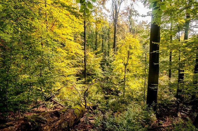 Nechajte 75 % rozlohy národných parkov bez zásahov, navrhuje WWF Matovičovej vláde