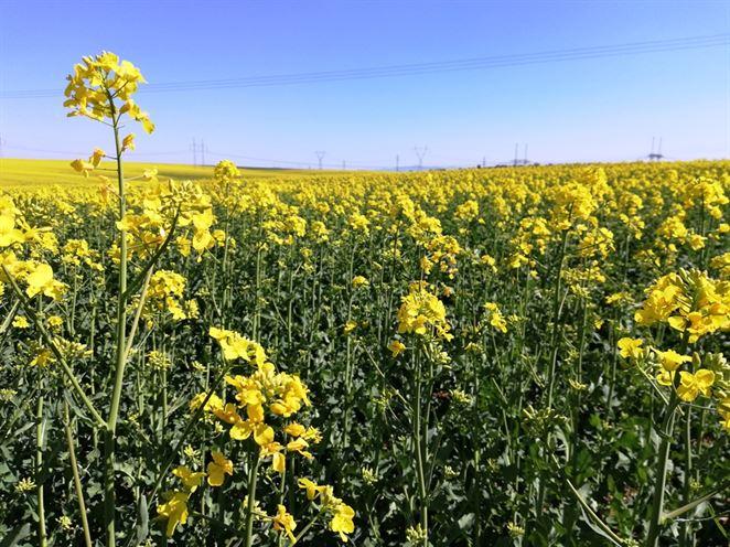 biopalivá