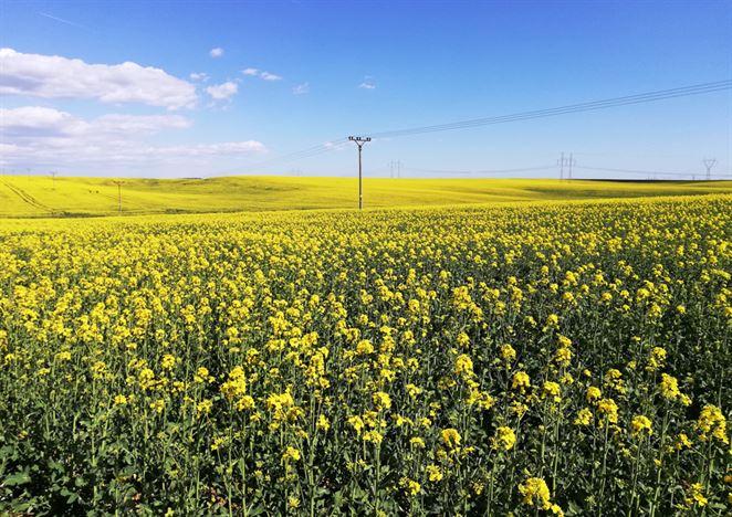 Podiel biopalív v motorových palivách po rokoch stagnácie rastie, ukázala správa MH SR