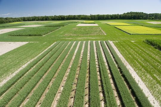 Česká vláda schválila nový program podpory biopalív vdoprave na roky 2015-2020
